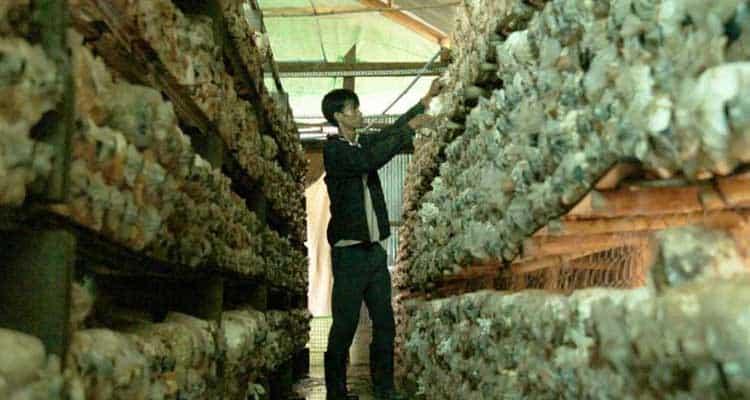Fungi farming brings safe money to bomb-addled Quang Tri