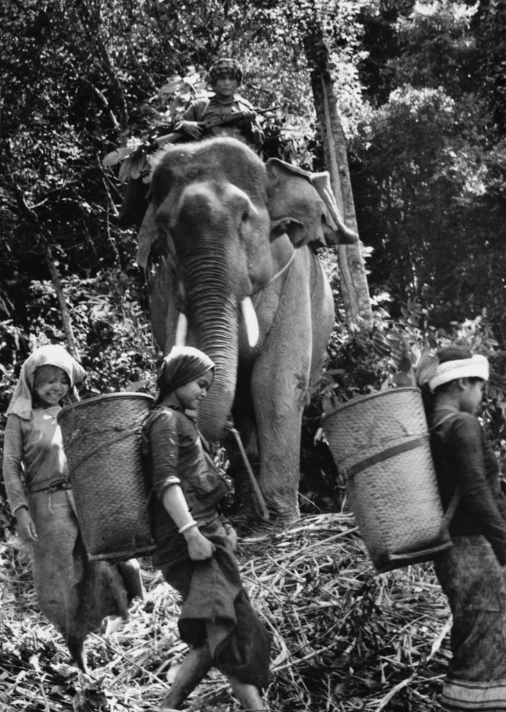 March 1971 Laotian guerrillas haul supplies by elephant and foot to NVA troops near Route 9 in southern Laos during South Vietnam's attempted interdiction of the trail. The invasion, Operation Lam Son 719, was intended to test ARVN's ability as U.S. support was winding down. It proved disastrous, with Southern troops fleeing in panic. IMAGE: DOAN CONG TINH/ANOTHER VIETNAM/NATIONAL GEOGRAPHIC BOOKS